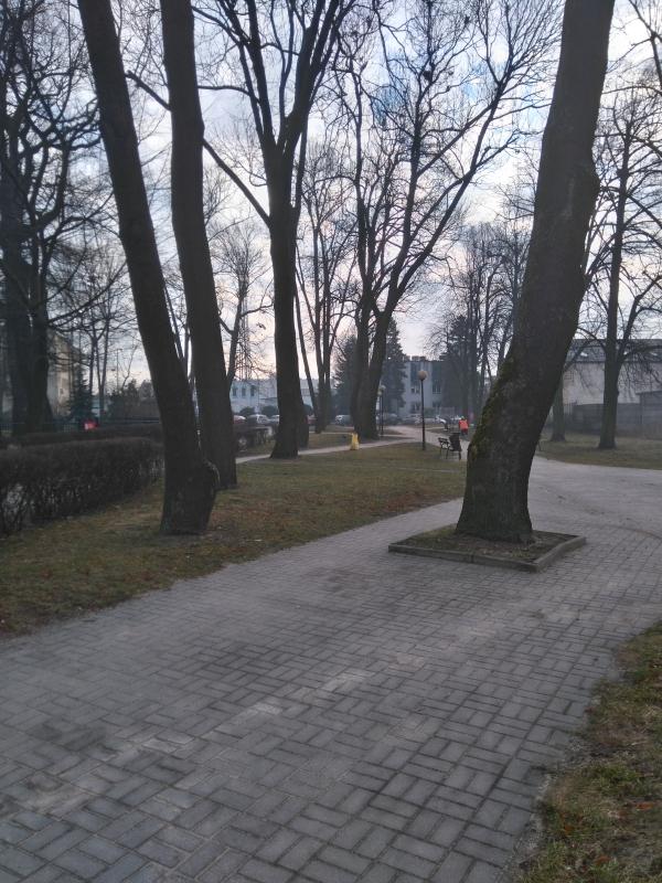 skwer_kolo_biblioteki_szpaler_drzew1