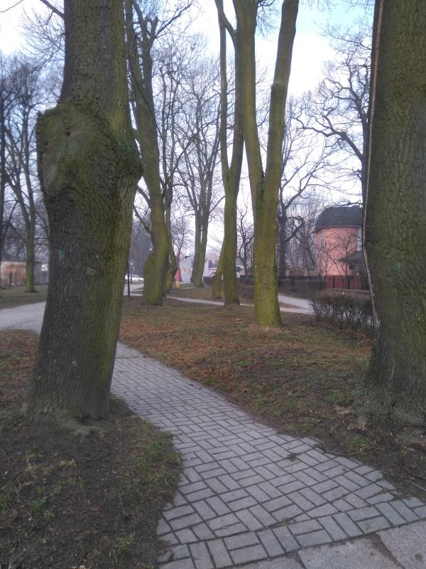 skwer_kolo_biblioteki_szpaler_drzew2