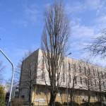 Najgrubsze drzewa w Radomsku
