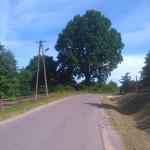 Stary dąb w Orzechowie