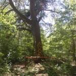 Kapliczka w środku… niczego. Gdzieś między Bogusławowem a Hutą Drewnianą