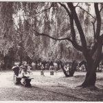 [czarno-biała pocztówka] Fragment parku w Radomsku